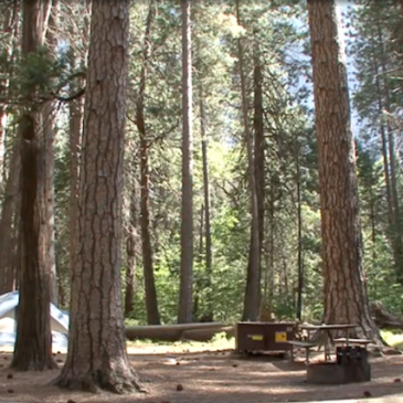 Yosemite, Bass Lake Campgrounds Now